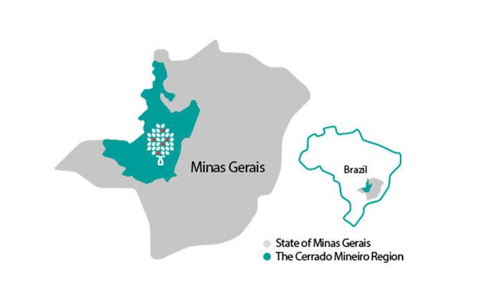 Café vert du Minas Gerais