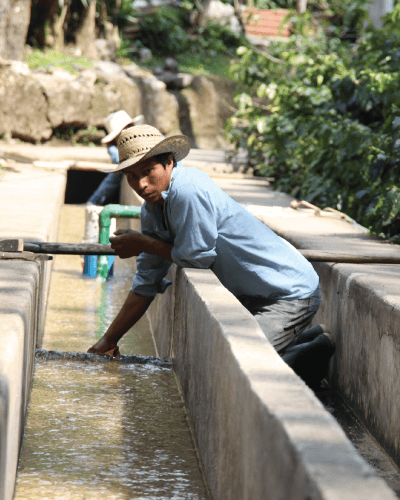 Water, an indispensable and scarce resource to produce coffee